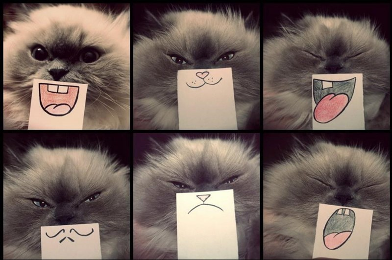 fluffy cat with expression overlays