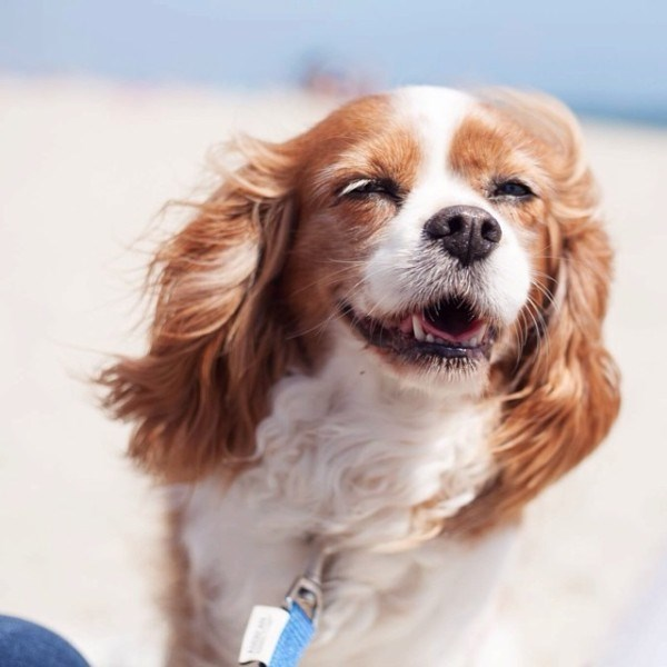 happy dog at the beach