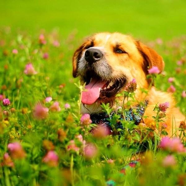 Dog in a grassy field