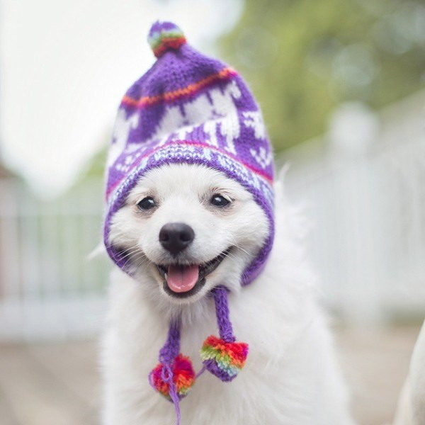 happy dog wearing purple hat in the cold