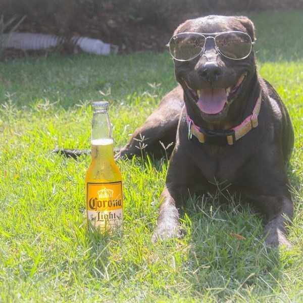 happy dog with sunglasses chilling on the grass with a beer