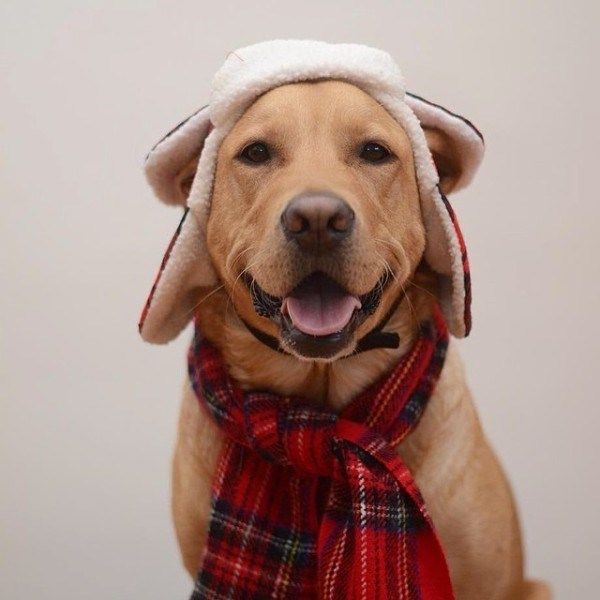 Dog posing with scarf and hat