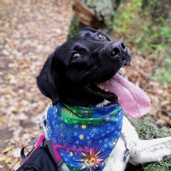happy dog wearing kerchief