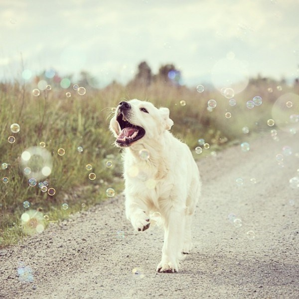 happy dog running down country road chasing bubbles
