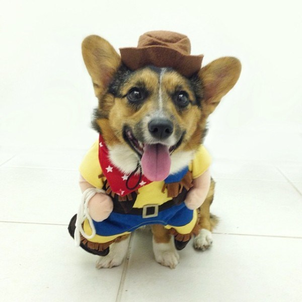 Dog dressed up in silly costume