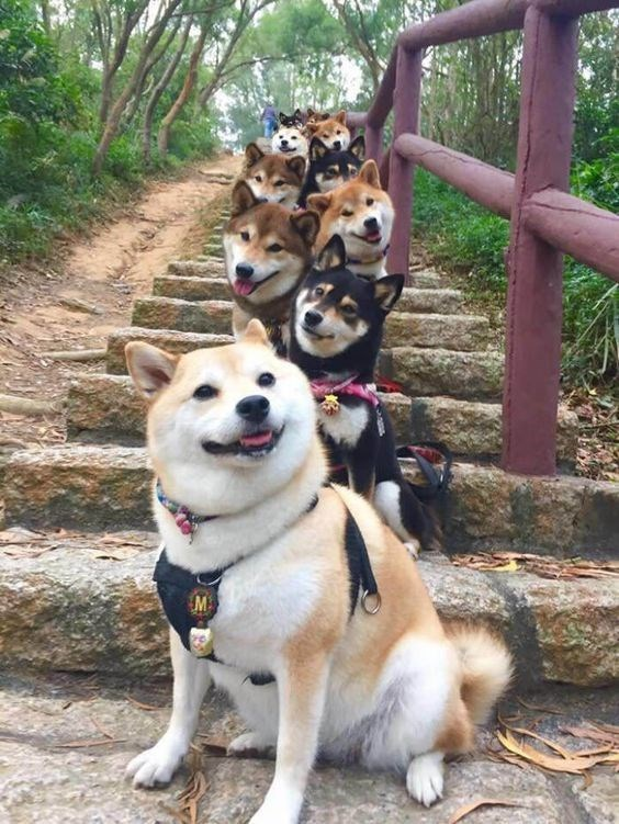very cute dogs on the stairs