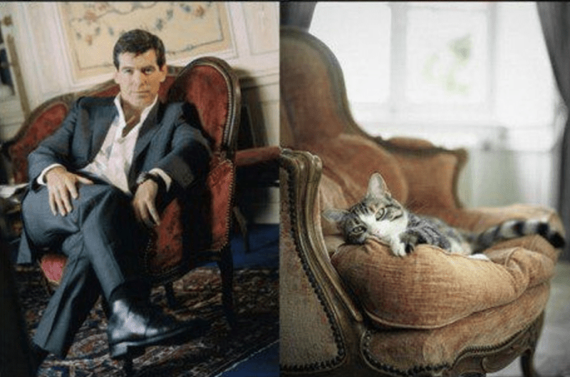 Male model on the arm chair and cat of similar posture also on an arm chair.