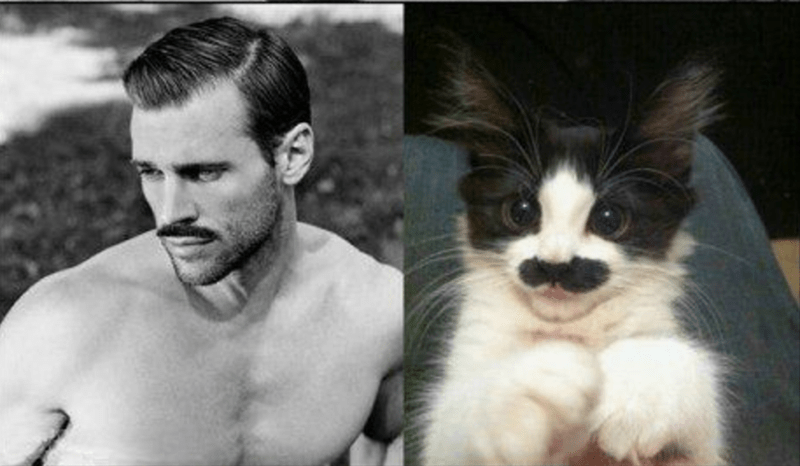 Male model with a mustache and cat withe a mustache - who wore it better?