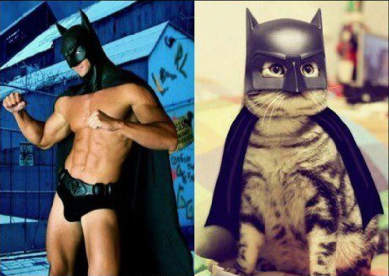 Male model wearing wearing Batman mask, cape and underpants, and cat wearing similar Batman attire.