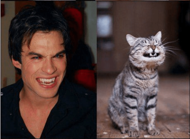 Male model smiling with elongated canines, and cat showing same smile.