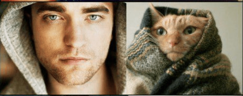 male model man and cat wearing hoodies