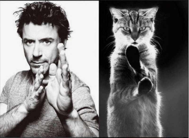 Robert Downey Jr. doing a karate pose and a cat doing a catate pose