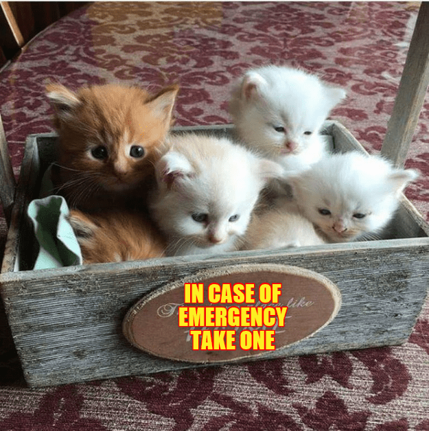 a funny meme of a box labeled in case of emergency and there are a few kittens