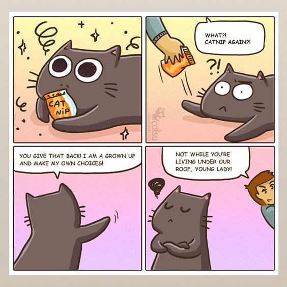 Castu the cat comic about catnip