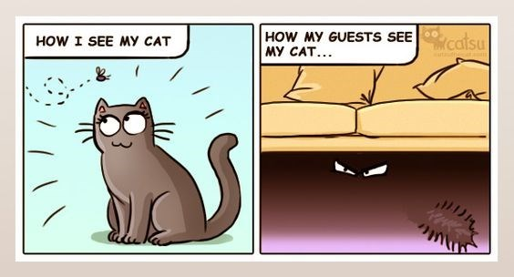 Catsu comic about how I see the cat VS how guests see the cat