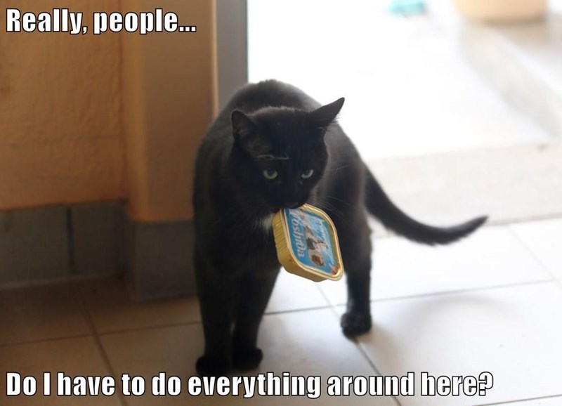 a funny meme on lolcats that shows a cat carrying a can of tuna and having to open it themselves