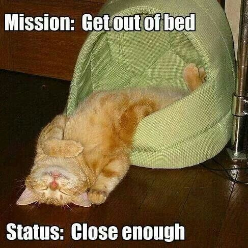 mornings bed tired Cats funny - 9054971648