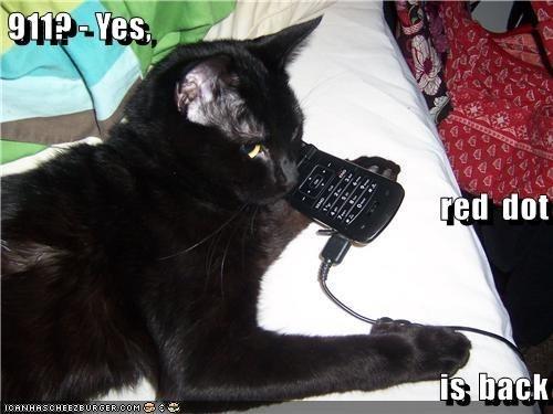 lolcats Cats funny - 9054972928