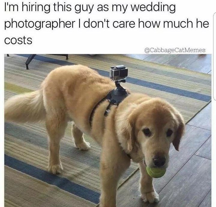Funny meme about hiring a dog as a wedding photographer.