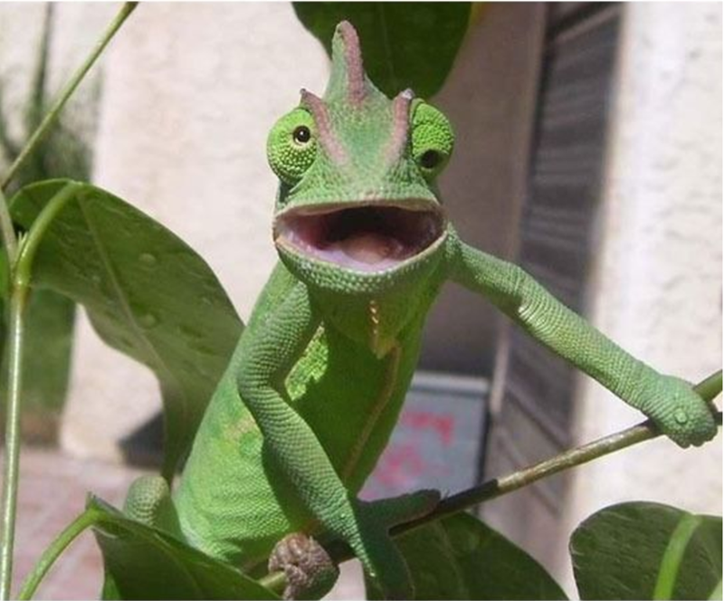 A very confused and surprised lizard