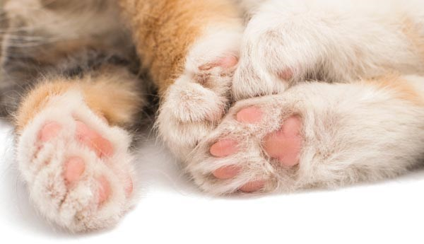 picture of pink cat paws