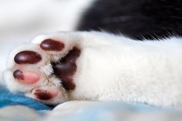 darker colored cat paws.