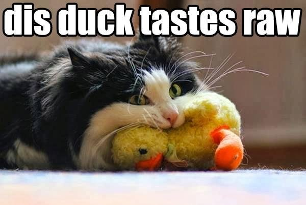 a funny meme of a cat chewing on a stuffed duck toy