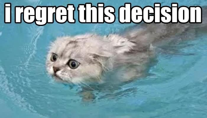 cat meme of it in the water looking like they regret that decision