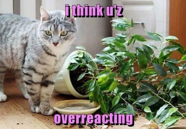 lolcats Memes Cats - 9055378944