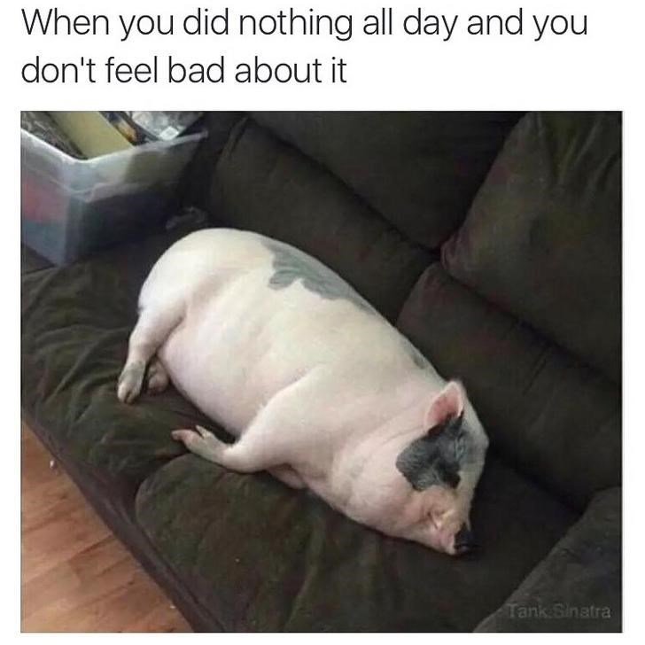 Domestic pig - When you did nothing all day and you don't feel bad about it Tank Sinatra