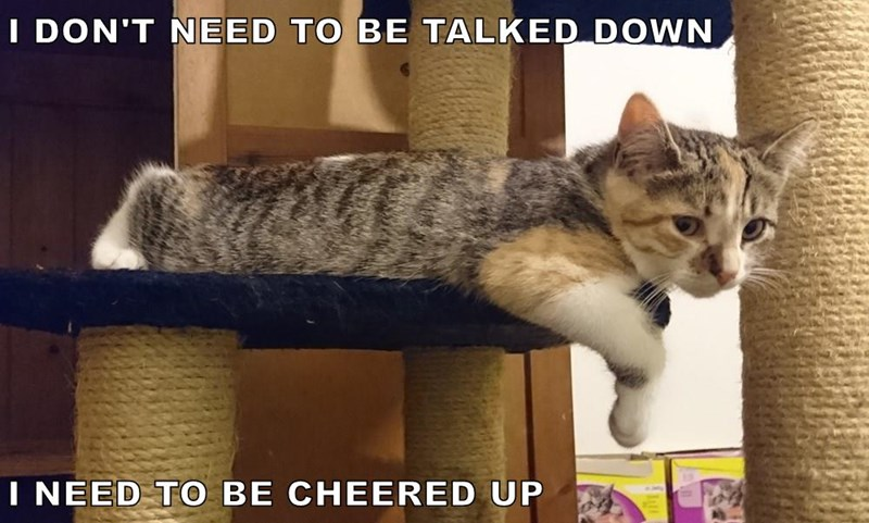 Meme of a cat saying he doesn't need to be talked down, but rather be cheered up.