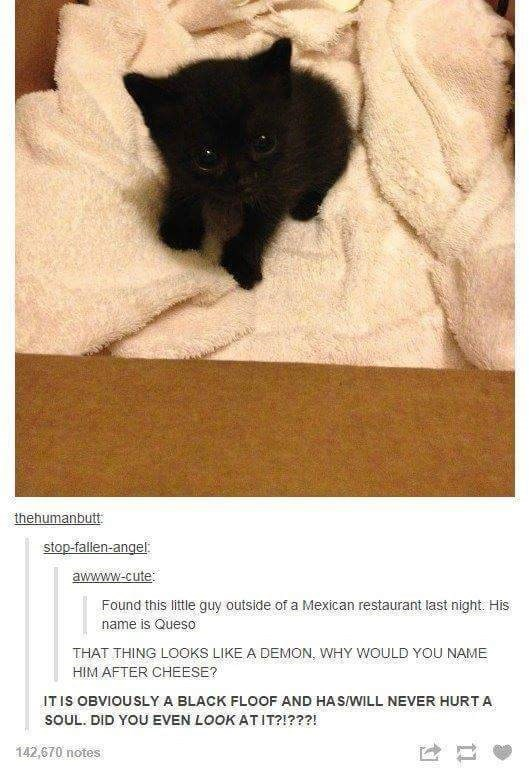 Comment thread about the nature of a very cute black kitten found out back behind a Mexican restaurant.