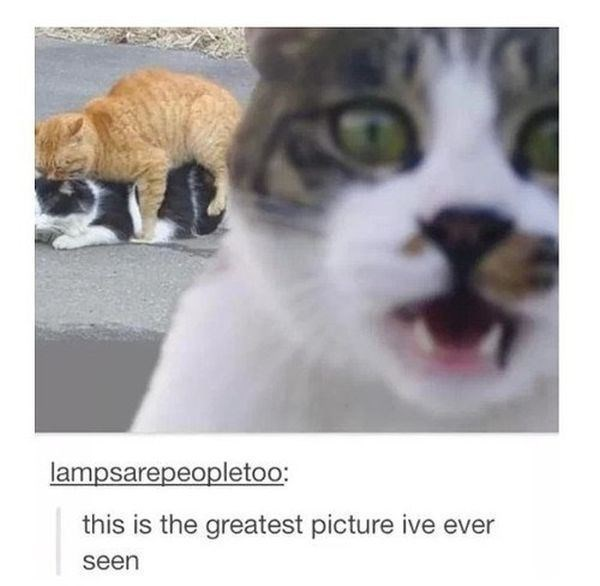 Pic of cats doing the deed with another cat photobombing in the foreground, out of focus