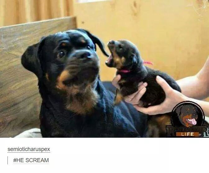 Dog being scared by tiny puppy
