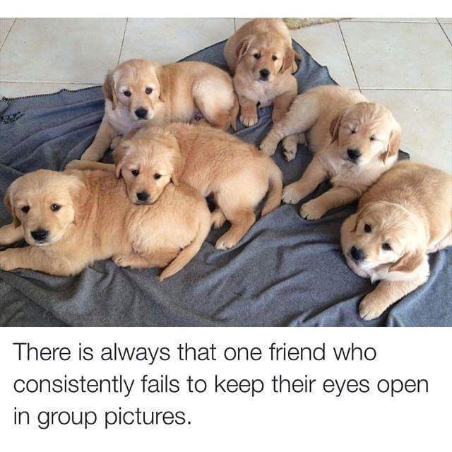 Picture of dogs and one has his eyes closed just like that one friend everyone has...