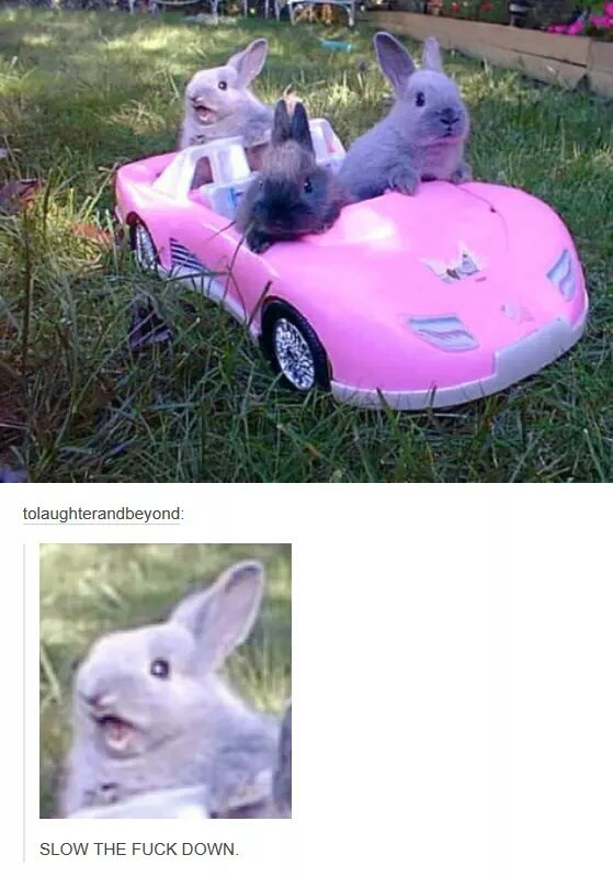 bunnys in a car and one is just not able to handle the speed