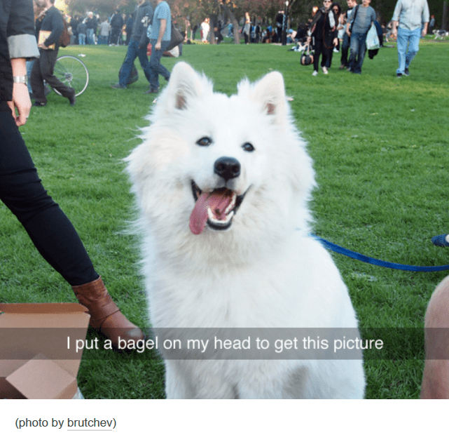 great picture of a dog yielded only because owner put a bagel on their head to make the dog stare at them and the camera
