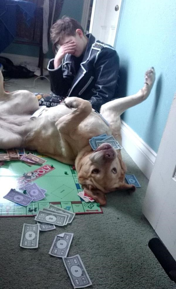 Dog that totally messed up a game of monopoly