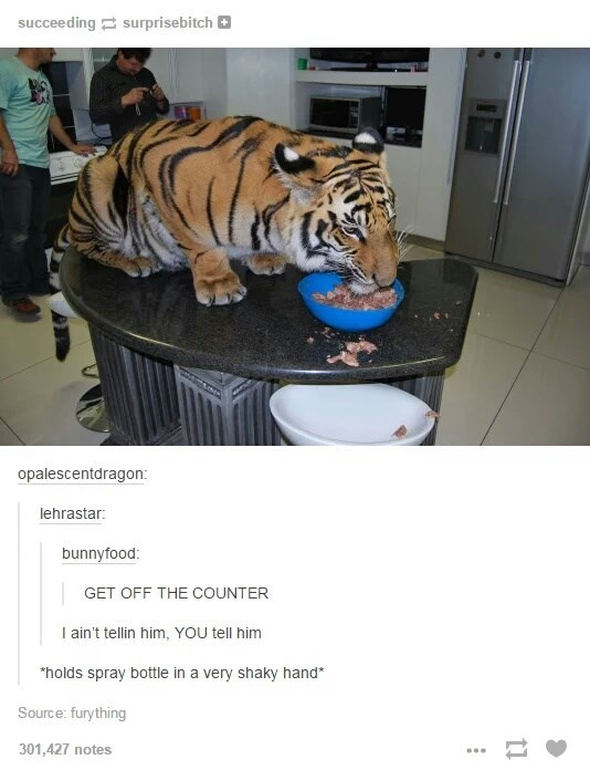 Tiger on the counter with jokes about how to get him off there the same way you'd for a cat