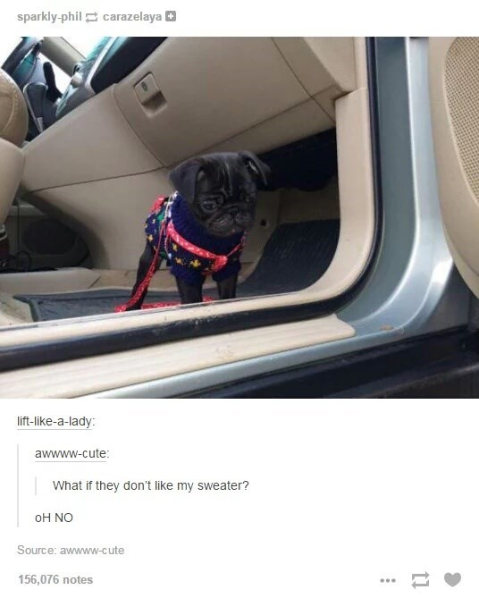 Cute dog with a sweater in a car, but he hesitates to join the party, why?