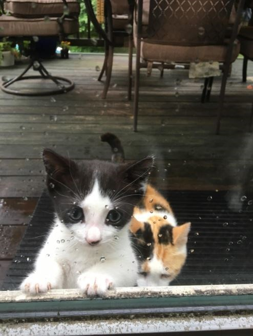Cute kittens by the window in the rain