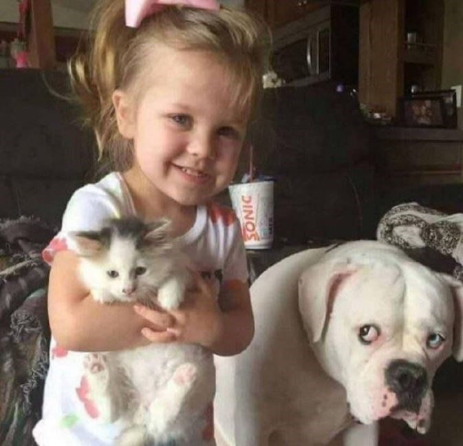 Girl holding a kitten and dog looks on sheepishly