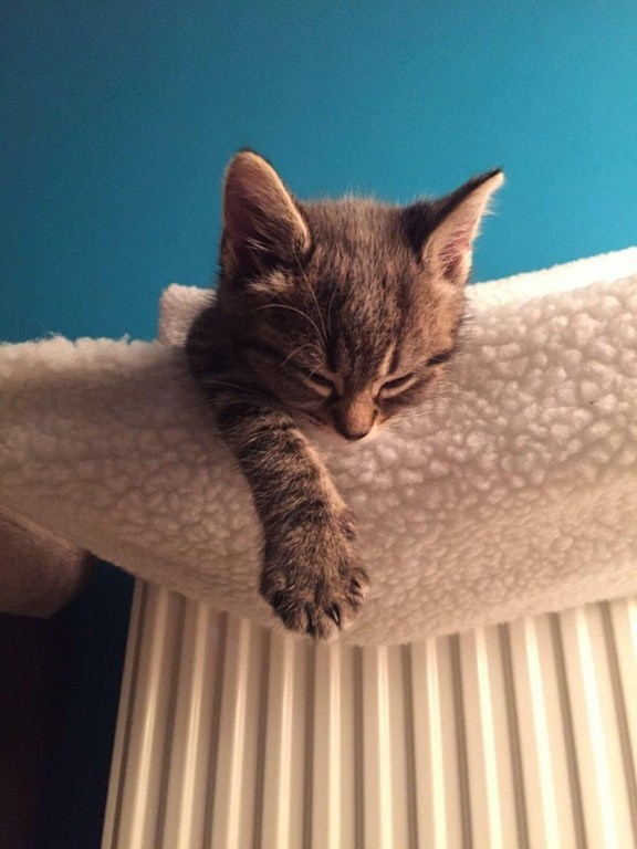 Kitten sleeping on a blanket