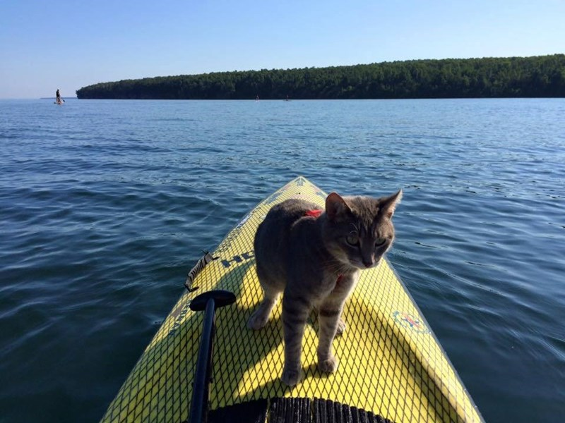 Little Bug the adventure cat on the edge of a kayak in the water.