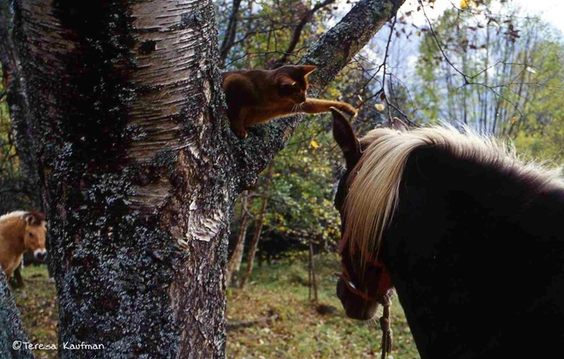cat in a tree saying hello to a passing horse