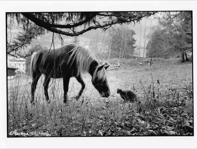Black and white of a horse smelling a cat