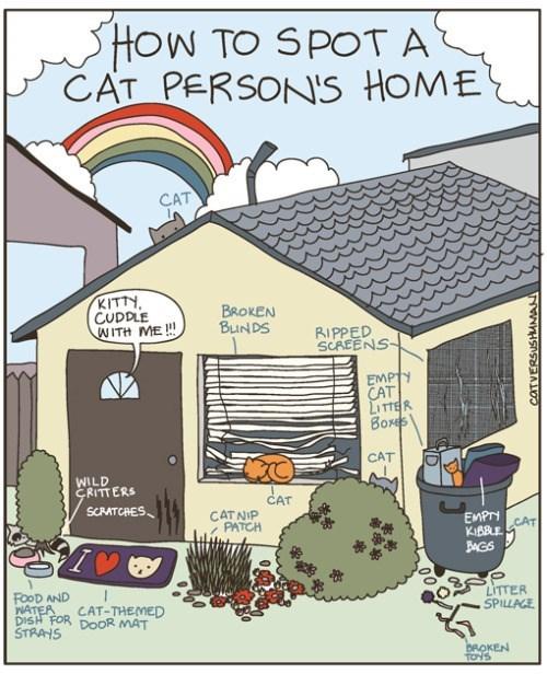photo comics of a cat person home