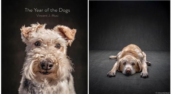 dogs dog photos book photo book animals - 9056005