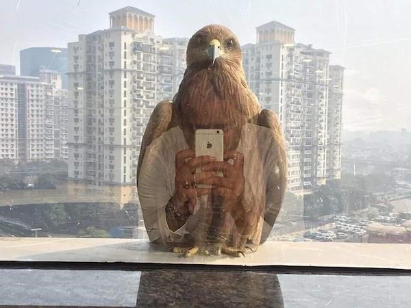 Perfect timing photo of bird outside someone's window in a city environment with reflection of the phone looking like bird is holding it.