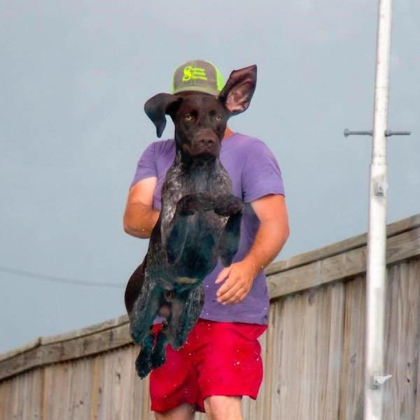 perfect timing photo of dog jumping in front of a man